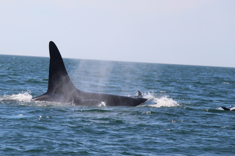brier-island-whale-and-seabird-cruises-11