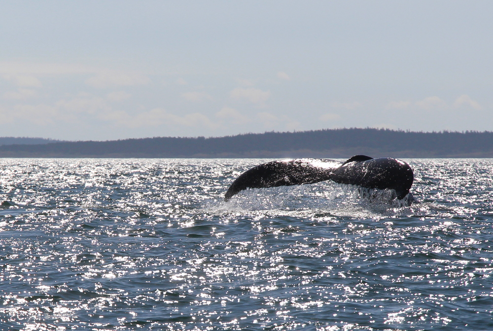 brier-island-whale-and-seabird-cruises-14