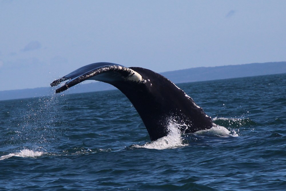 brier-island-whale-and-seabird-cruises-15
