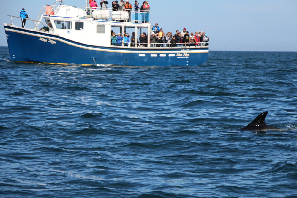 brier-island-whale-and-seabird-cruises-7