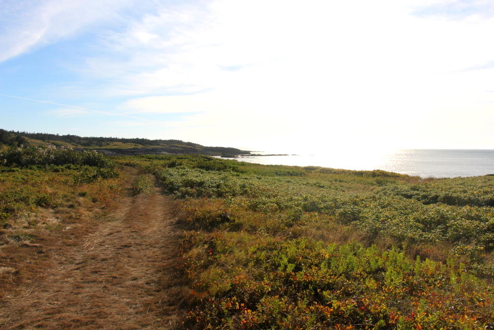 seal-cove-brier-island-2