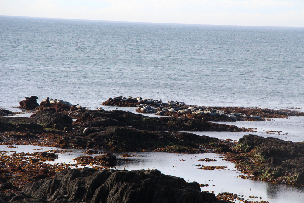 seal-cove-brier-island-3